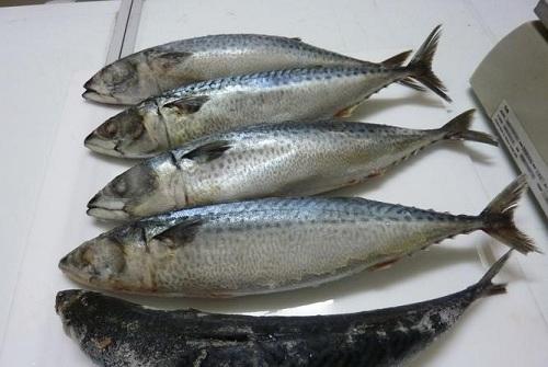 Các dưỡng chất trong cá biển đem đến khả năng trị tàn nhang, nám da từ bên trong