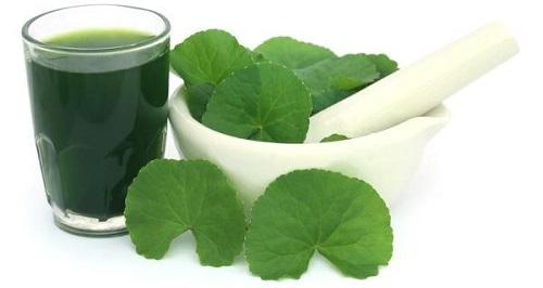 Rau má là loại dược liệu có nhiều lợi ích đối với sức khỏe và làm đẹp