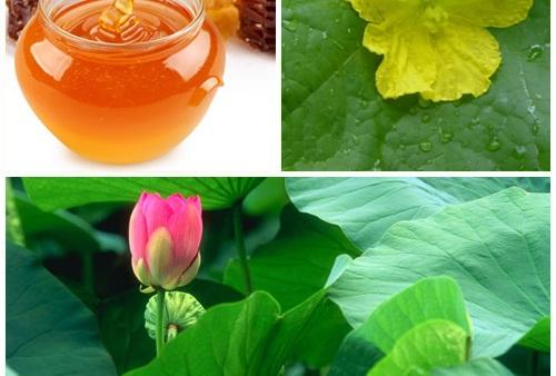 Trị tàn nhang nám da bằng hỗn hợp mật ong lá mướp, lá sen đem đến hiệu quả tại nhà