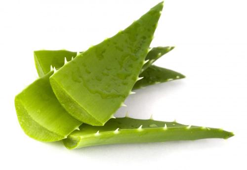 Nha đam là nguyên liệu tuyệt vời giúp tăng cường sức khỏe của làn da