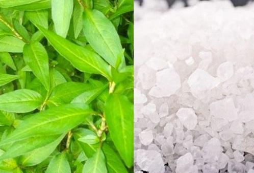 Muối có tác dụng kháng viêm, diệt khuẩn, bên cạnh đó rau răm lại mang đến khả năng thu nhỏ lỗ chân lông hiệu quả tại nhà.