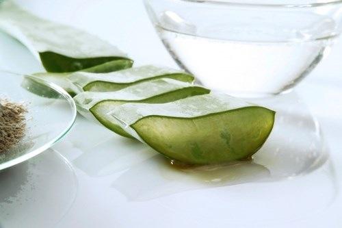 Nha đam chứa nhiều dưỡng chất có tác dụng tắm trắng hiệu quả