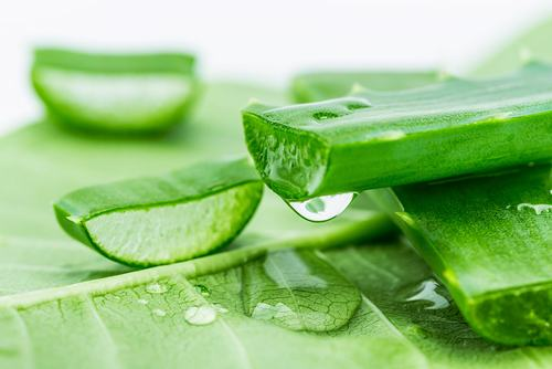 Nha đam là nguyên liệu chứa nhiều dưỡng chất quý giá giúp làm đẹp da hữu hiệu