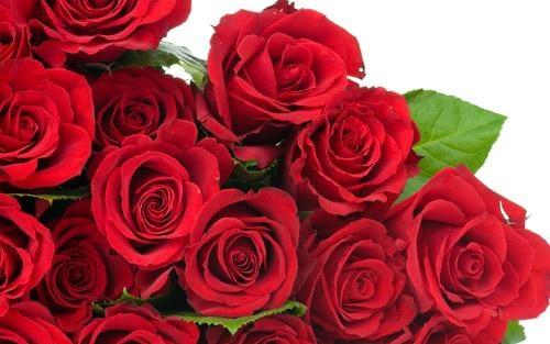 chăm sóc sắc đẹp cùng hoa hồng mai lại những công dụng cho da