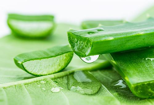 Nha đam chứa các dưỡng chất thiết yếu giúp bạn làm mờ các vết rạn da an toàn.