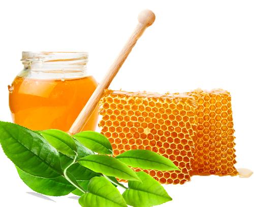 Trị nám tàn nhang bằng lá ổi và mật ong rất an toàn và thích hợp cho mọi loại da.