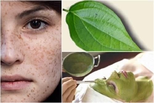 Mặt nạ lá trầu khồng làm sạch các vết nám trên da, trả lại cho bạn làn da mịn màng và tươi sáng.