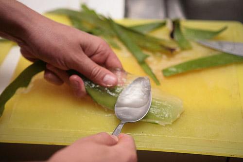 Lọc nha đam lấy thịt sau khi đã loại bỏ nhựa vàng để bôi lên mặt