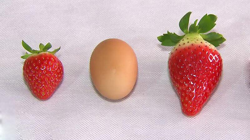 Dọn sạch mụn đầu đen mỗi ngày bằng dâu tây kết hợp lòng trắng trứng gà