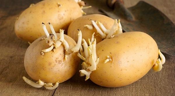 Mặt nạ khoai tây giúp tẩy lông vùng kín an toàn, hiệu quả mà không gây tổn thương vùng da xung quanh.