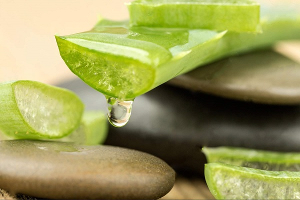 Mặt nạ trị nám từ nha đam kết hợp với dầu ô liu cũng rất an toàn nên thích hợp sử dụng cho mọi loại da.