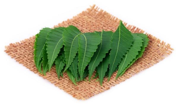 Lá cây neem có tính kháng khuẩn nên có tác dụng loại bỏ nguyên nhân gây mụn nhanh chóng.