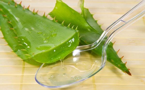 Trị tàn nhang bằng rau sam và gelnha đam đem lại hiệu quả nhanh chóng và an toàn cho làn da.
