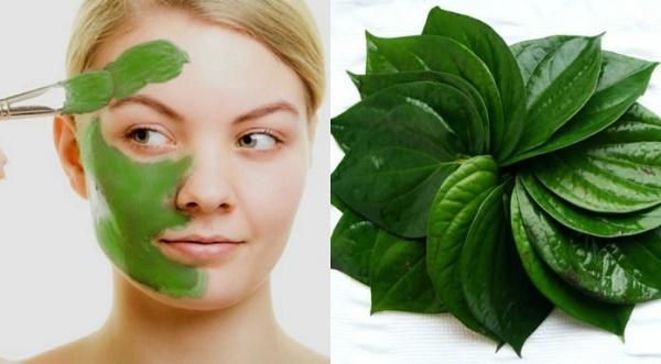 Mặt nạ trị nám từ lá trầu có thể áp dụng cho mọi loại da mà không gây kích ứng.