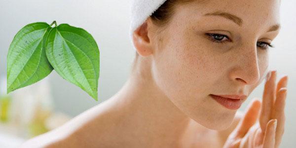 Lá trầu không có công dụng ngăn chặn sự hình thành của các hắc sắc tố melanin – nguyên nhân gây nám, tàn nhang.